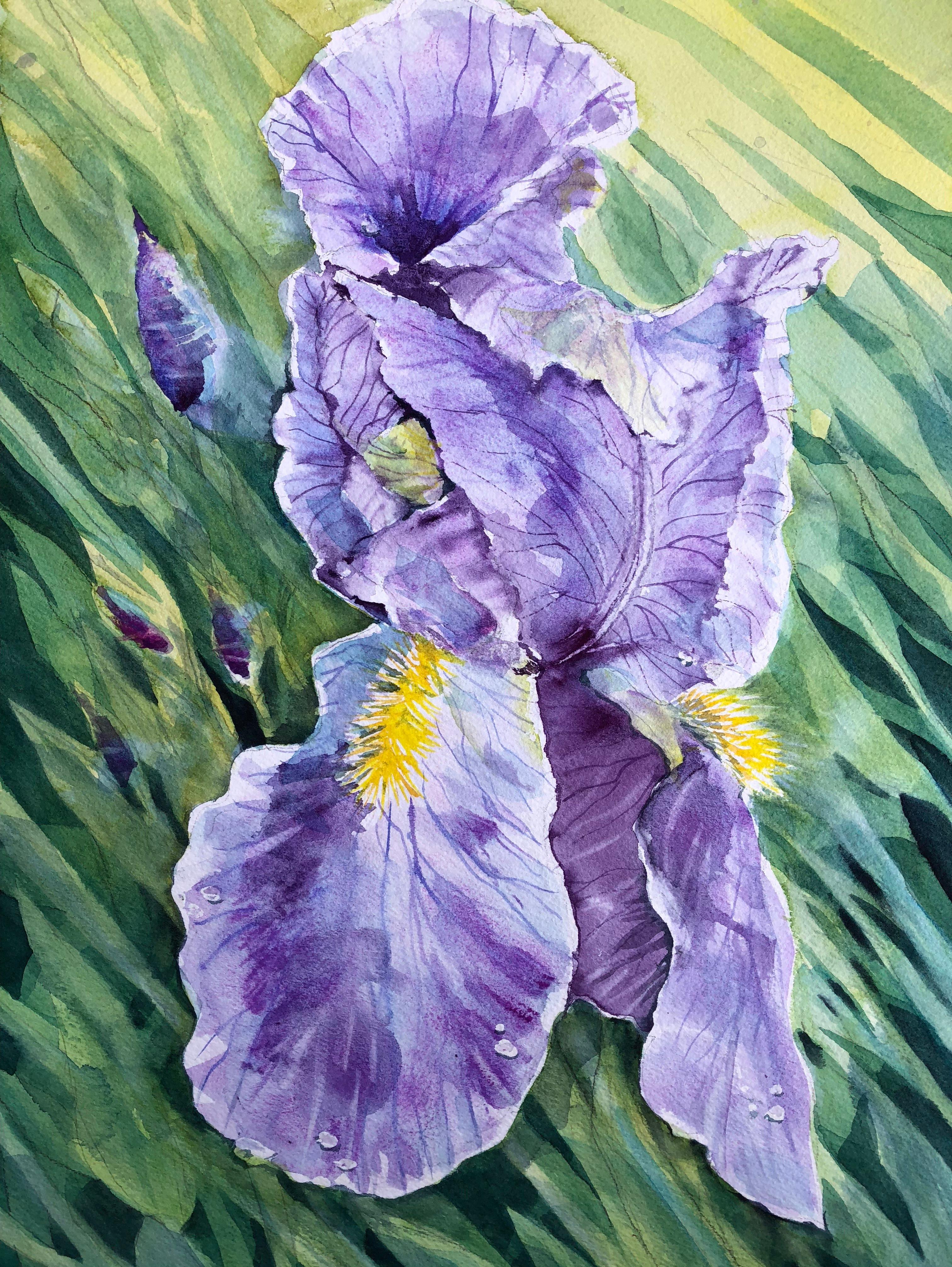 Iris at Almesbury Court