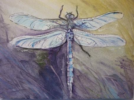 DragonflyBlueCloseup