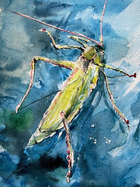 ITaylor_GrasshopperOnMyWindow